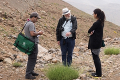 Plant collection in Ait M'hamed 8