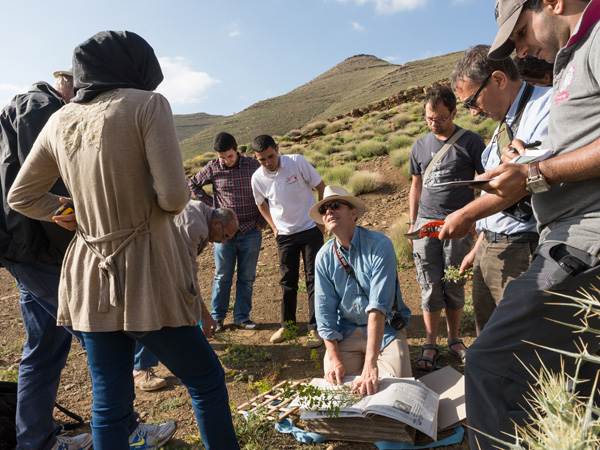 Plant collection in Ait M'hamed 7